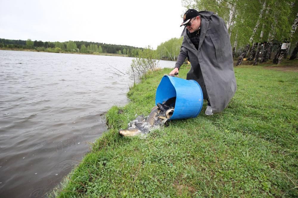 Платная рыбалка в псковской области: рыболовные туры, охотничьи базы и водоемы пскова