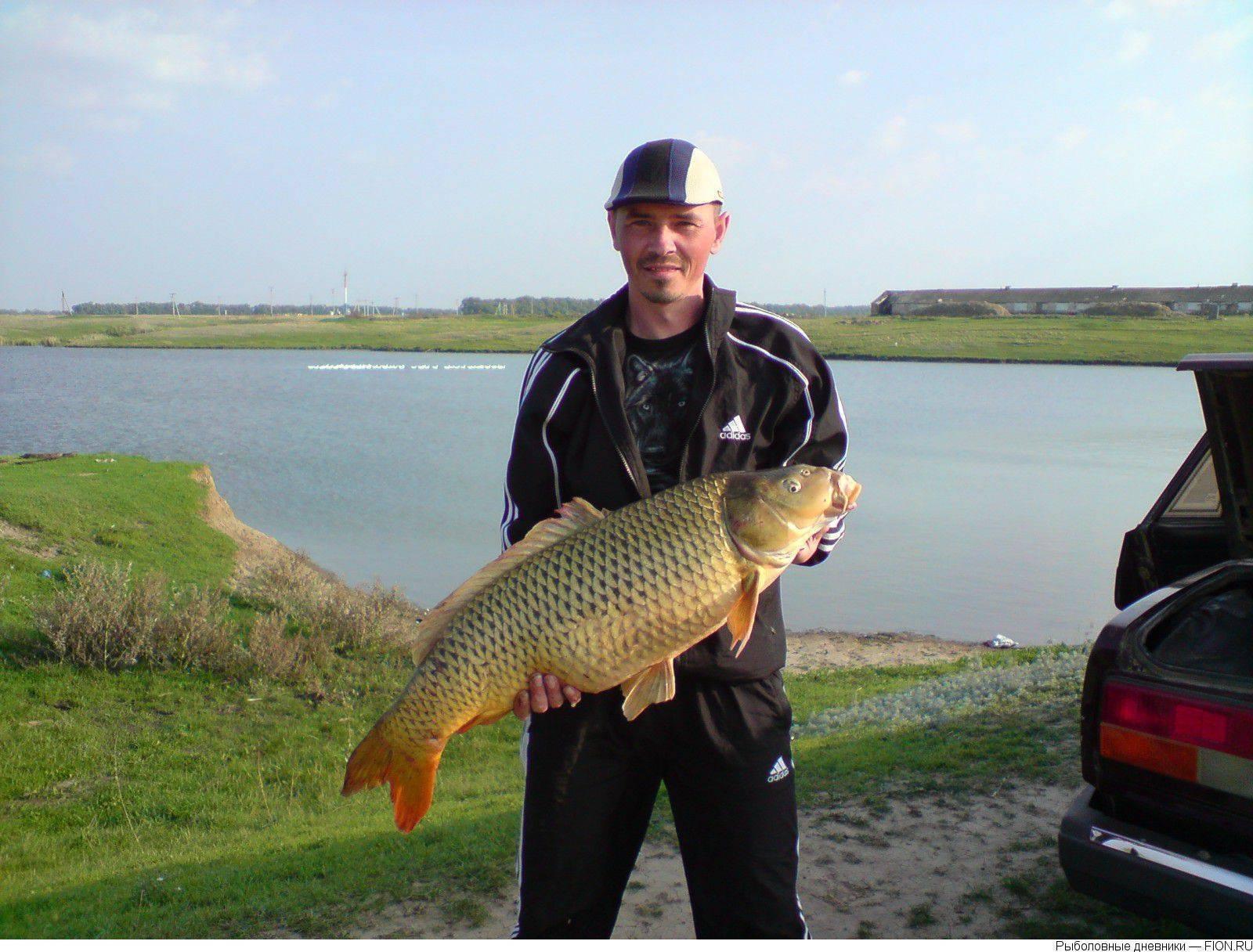 Рыбалка на дону: список баз и какая рыба ловится сегодня