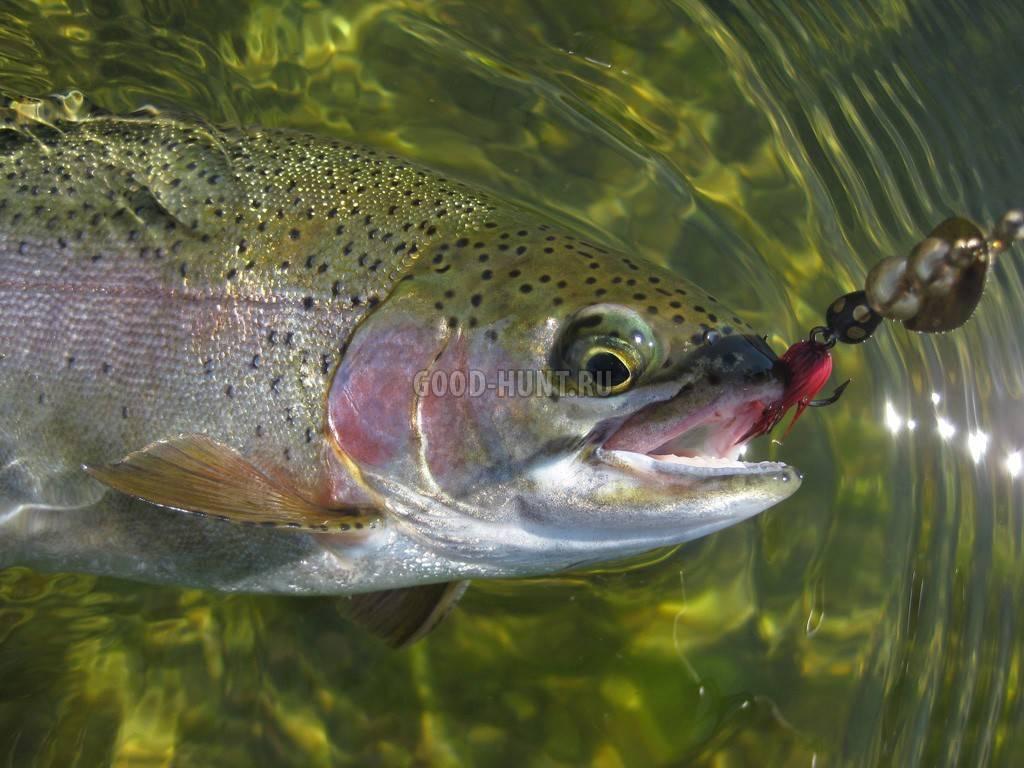 Ловля лосося: где и когда ловить, обзор приманок и снастей