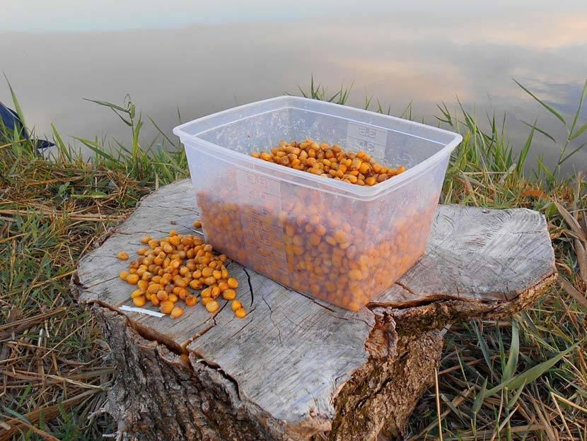 Какая рыба клюет на пшеницу: как правильно запаривать для рыбалки и насаживать на крючок зерно