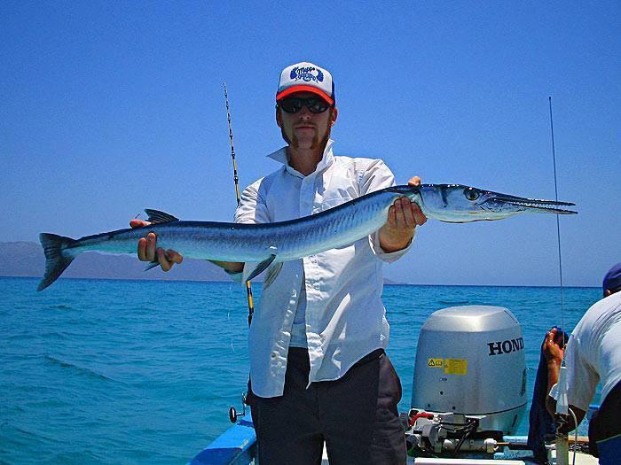 Когда сарган у самого берега - спортивное рыболовство