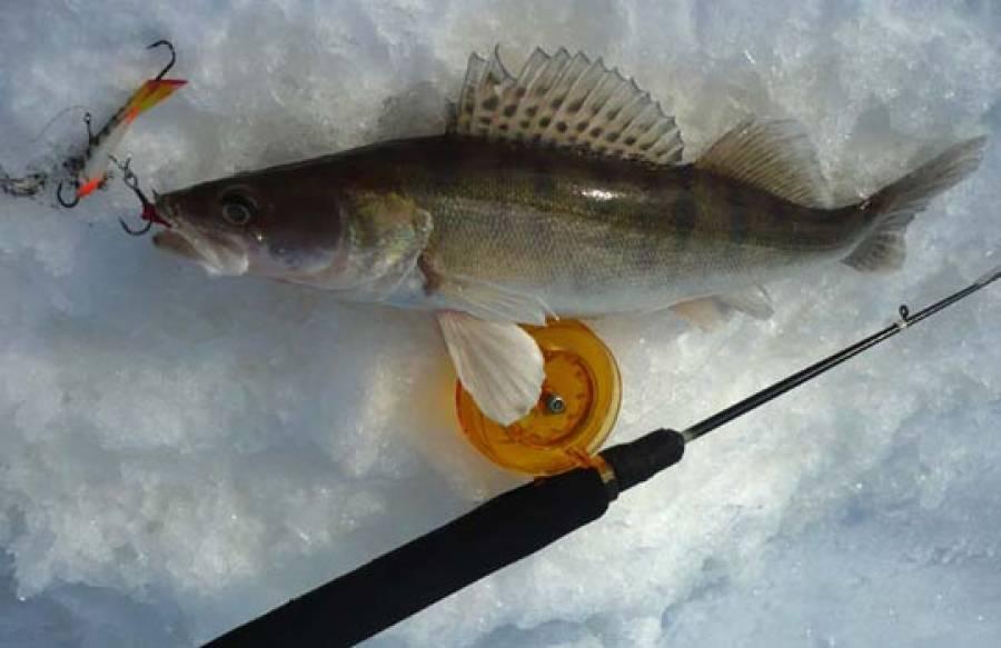 Рыбалка с балансиром. ловля судака.