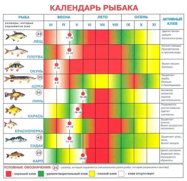 Влияние солнца, луны, погоды на клев рыбы. солнечные и лунные циклы - когда рыба клюет и когда рыба не клюет