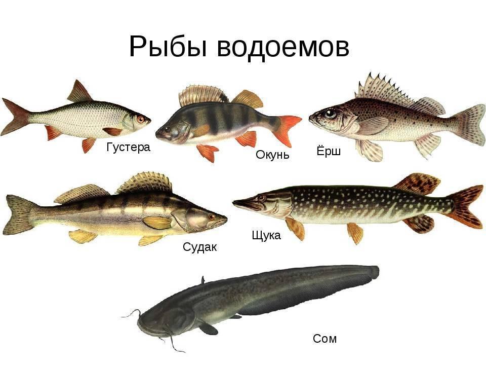 Рыбалка на пахре