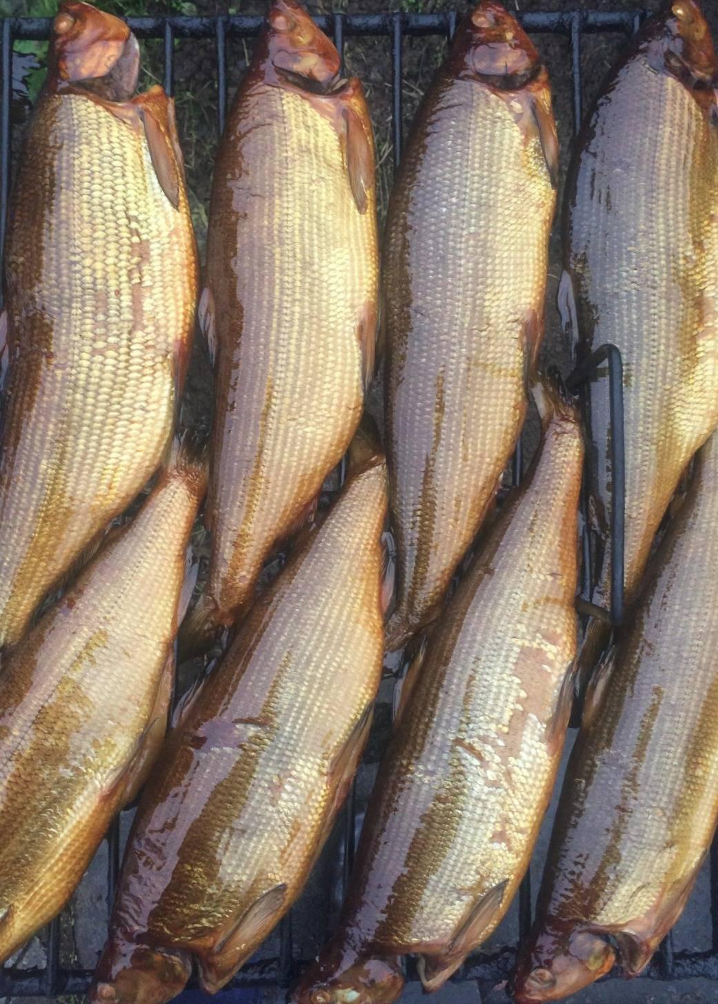 Сиг: описание рыбы с фото и видео, ловля зимой и летом
