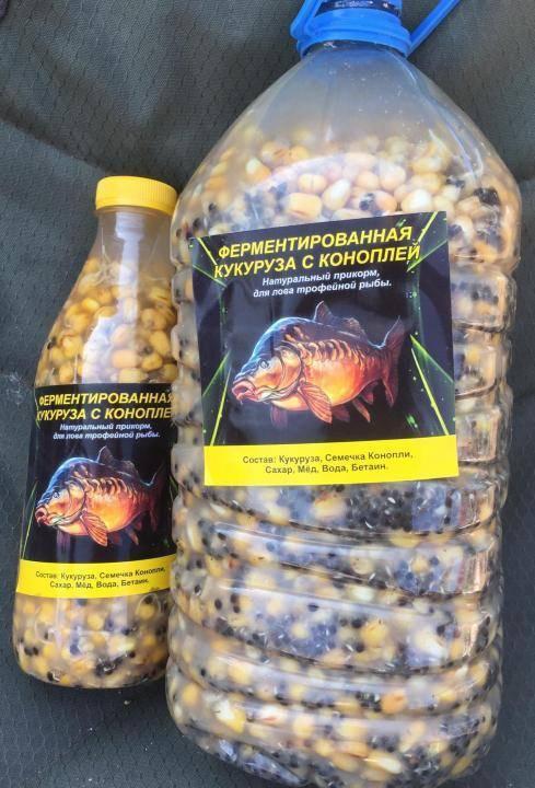 Кукуруза на карпа: ферментированная, силиконовая, как правильно варить, насадить