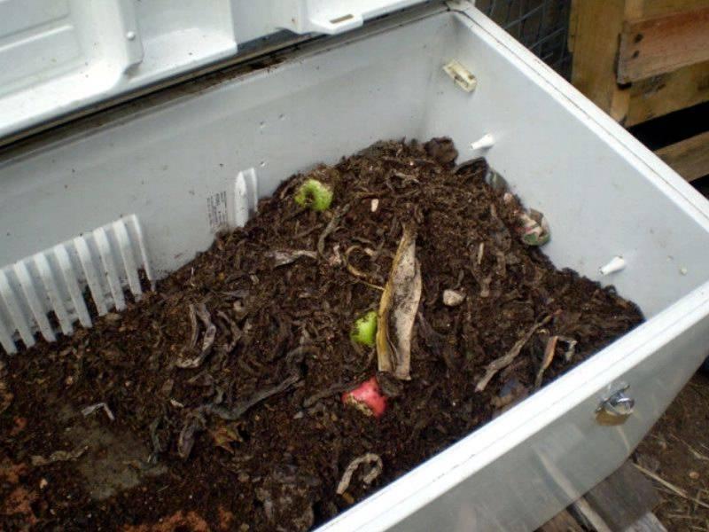 Особенности разведения червей в домашних условиях: где взять и в чем содержать, чем кормить и как ухаживать