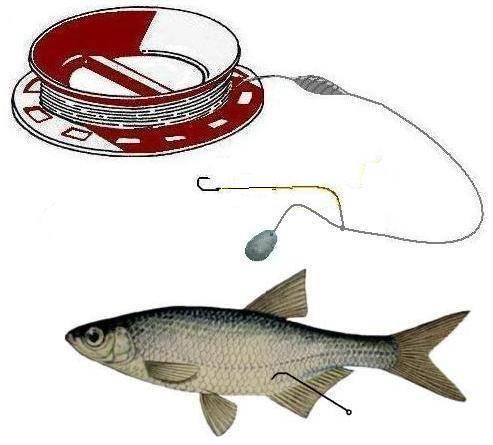 Секреты ловли судака на живца: ловись рыбка большая на маленькую