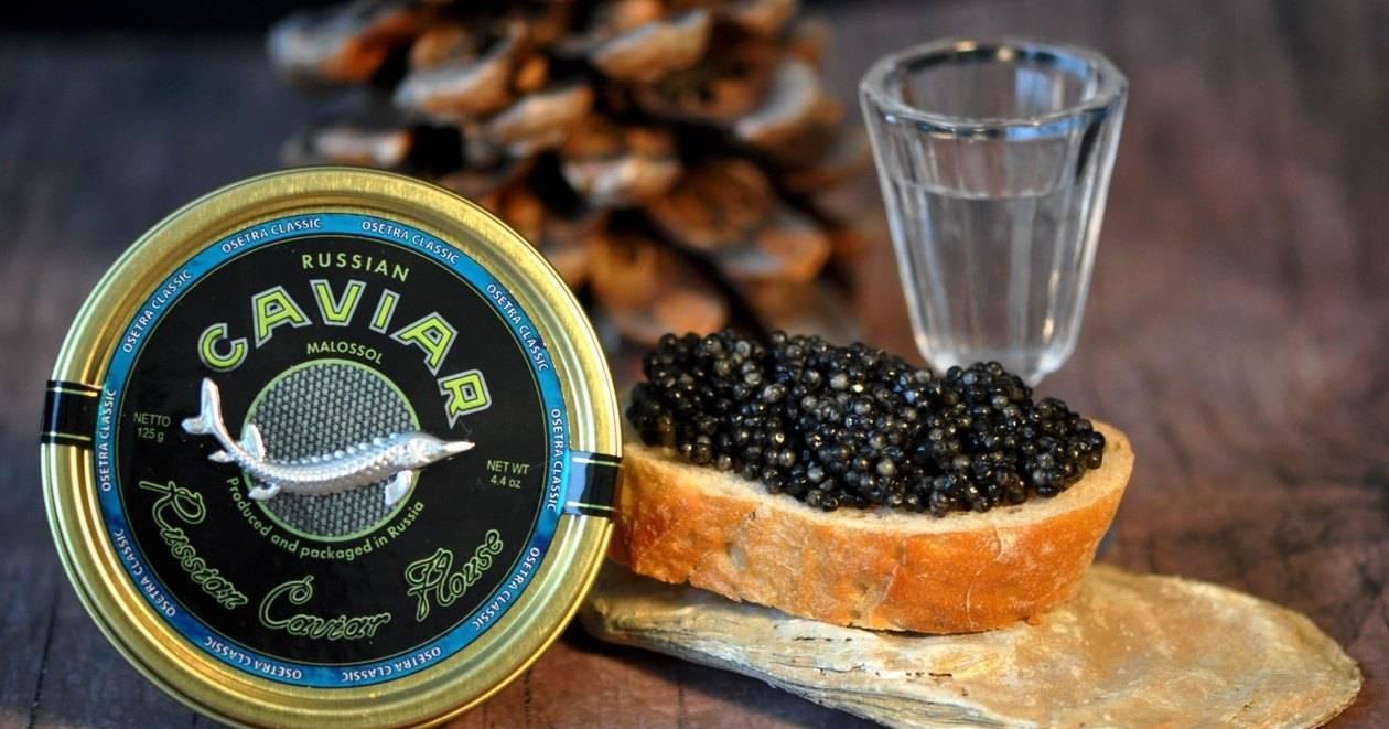 Что за продукт черная икра: из какой рыбы добывается, полезные свойства