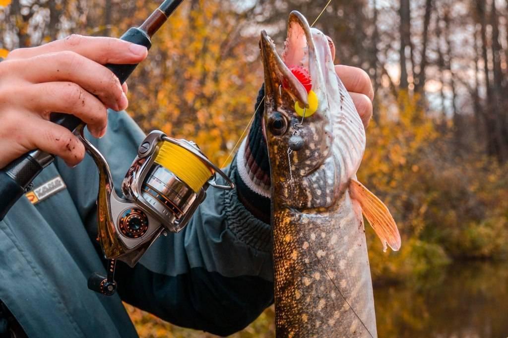 Рыбалка в сентябре - какая рыба ловится и где ее искать