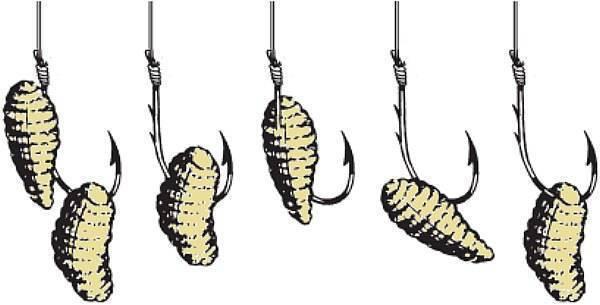 5 способов как правильно насаживать опарыша на крючок - рыбачок!сайт рыбачок