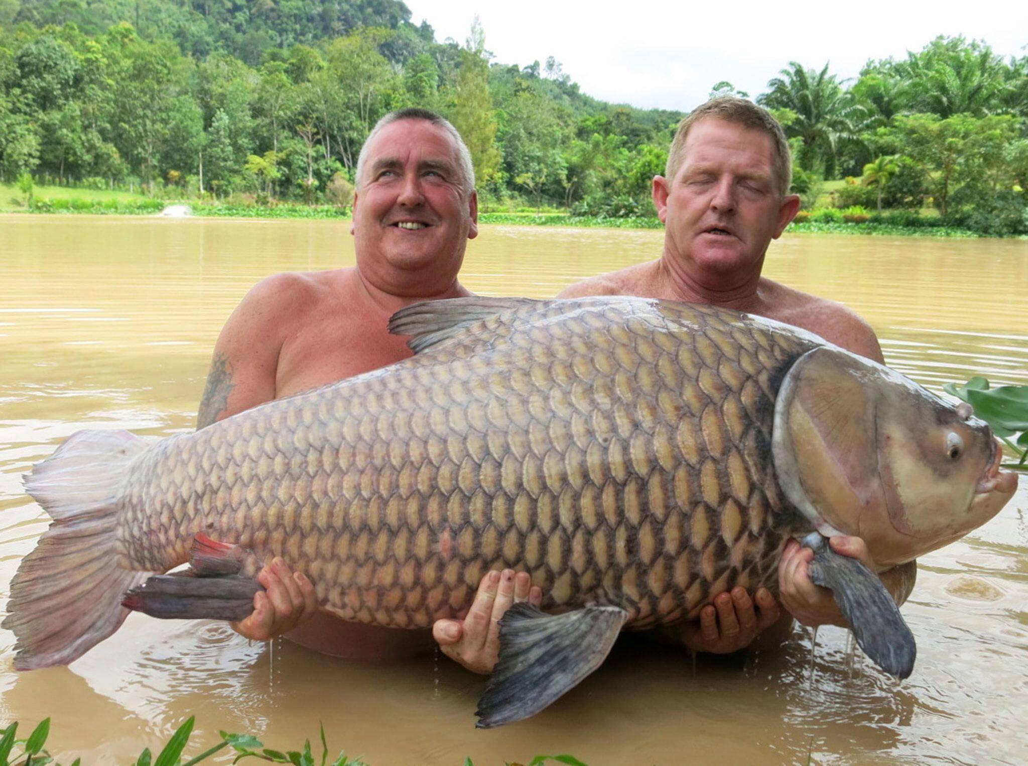 Рыба карп: где обитает, водится, среда обитания, размеры и вес