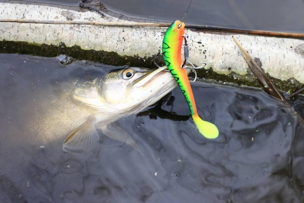 Ловля щуки на малых реках на спиннинг: выбор снасти, тактика поиска