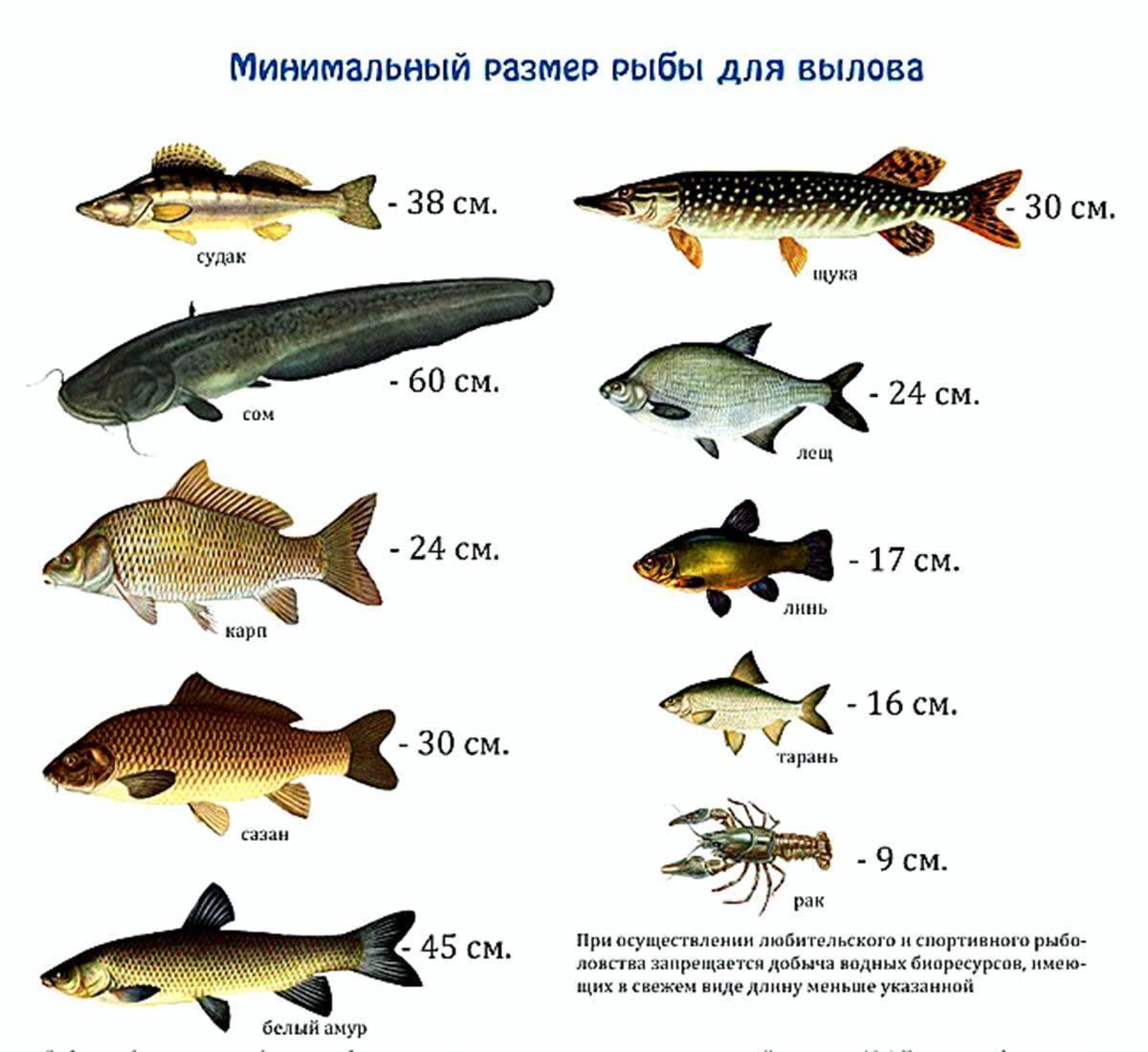 Рыбалка на волге в конце лета