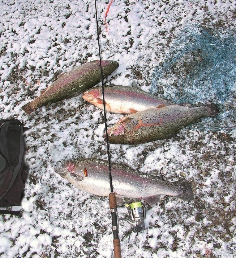 Ловля форели в ноябре - читайте на сatcher.fish