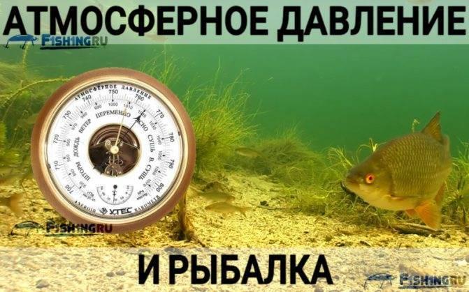 Влияние ветра на клев и ловлю рыбы | уклейка. энциклопедия ловли.
