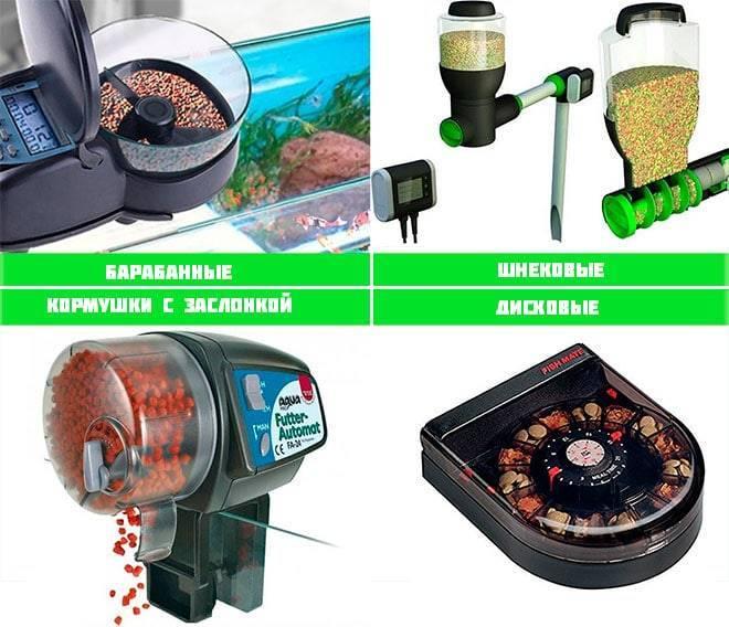 Автокормушка для аквариума, плюсы и минусы кормушек для рыб