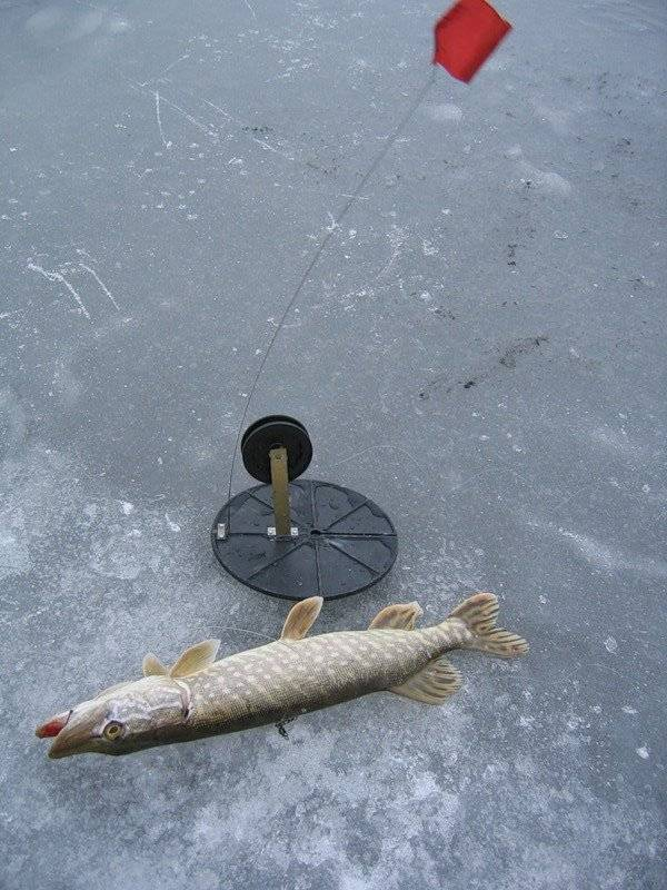 Ловля щуки зимой на жерлицы: где ловить и как ставить жерлицу на щуку