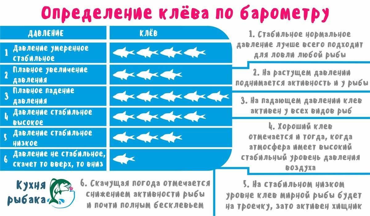 При каком ветре и давлении лучше клюет карась и другая рыба
