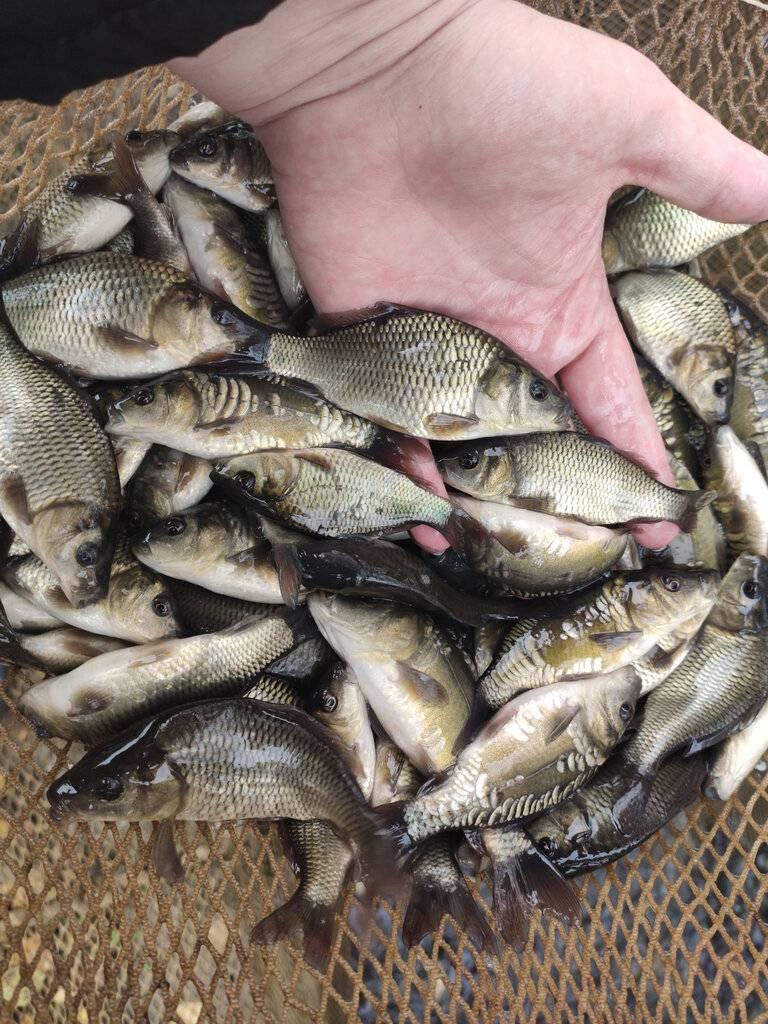 Рыбалка в клинском рыбхозе в новоселках, платная рыбалка в клинском рыбхозе, отзывы