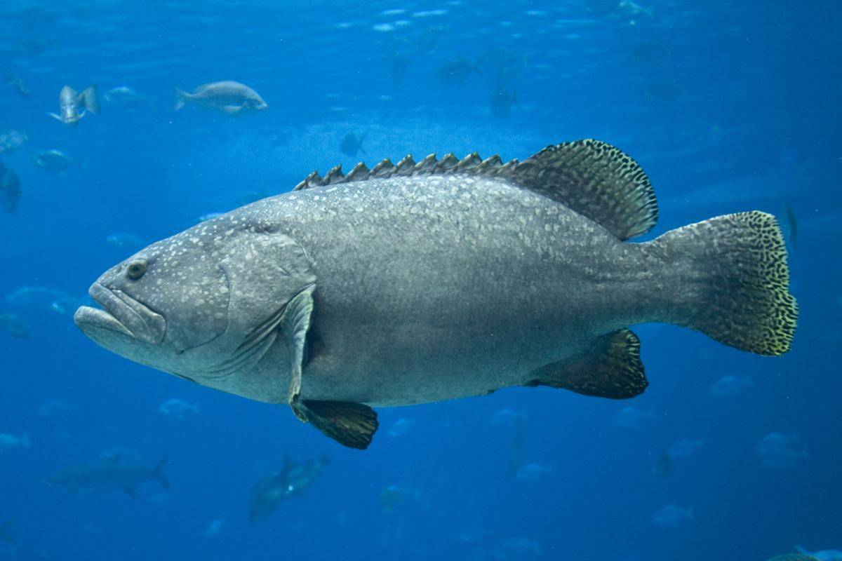 Рыба минога: где живет, ее особенности и отличия, размножение