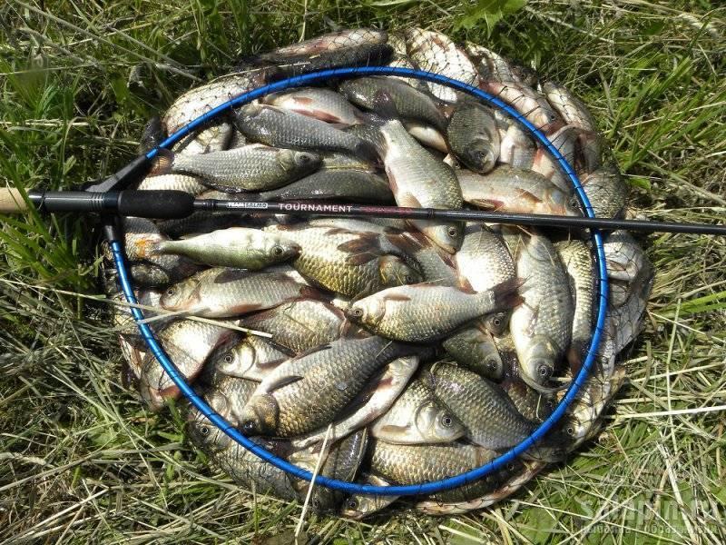 Поездка вНестеровку: фидерная рыбалка идомашнее консервирование подуста