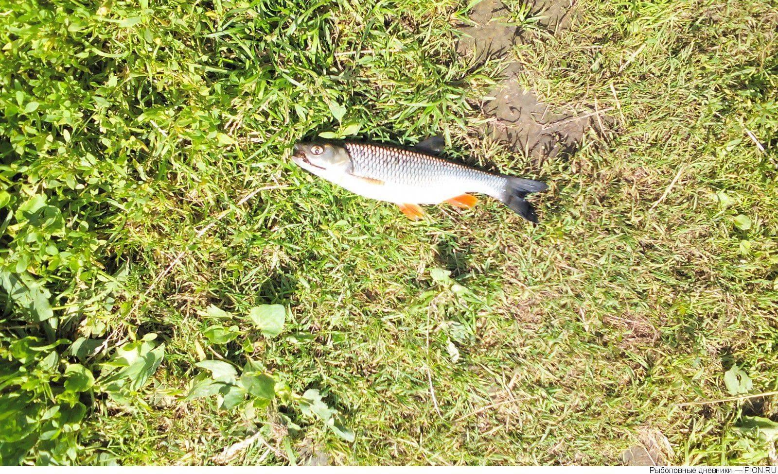 Рыбалка на дубешне