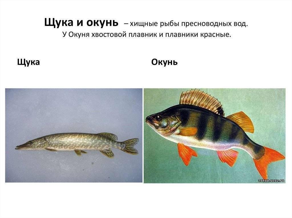 Типы связей и взаимоотношений между организмами