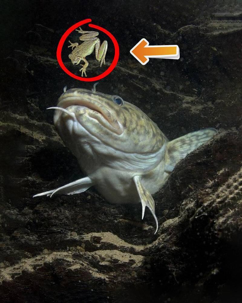 Секреты ловли щуки на лягушку: снасть, приманки, тактика - vobler club