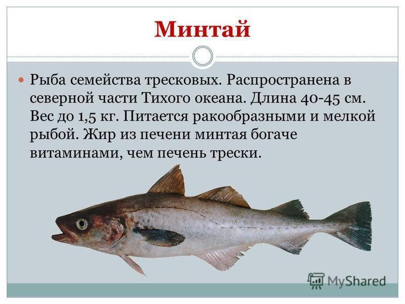Простипома – рыба необычная: описание, особенности, приготовление
