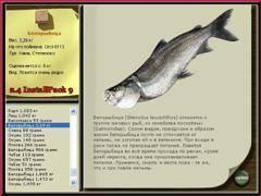 Белорыбица: фото, что это за рыба, описание, каким цветом мясо