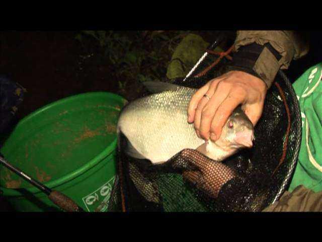 Как ловить леща: на что клюет и как правильно организовать процесс