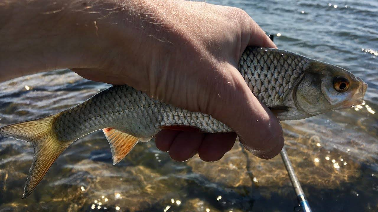 Ловля крупной плотвы - рыбколов!