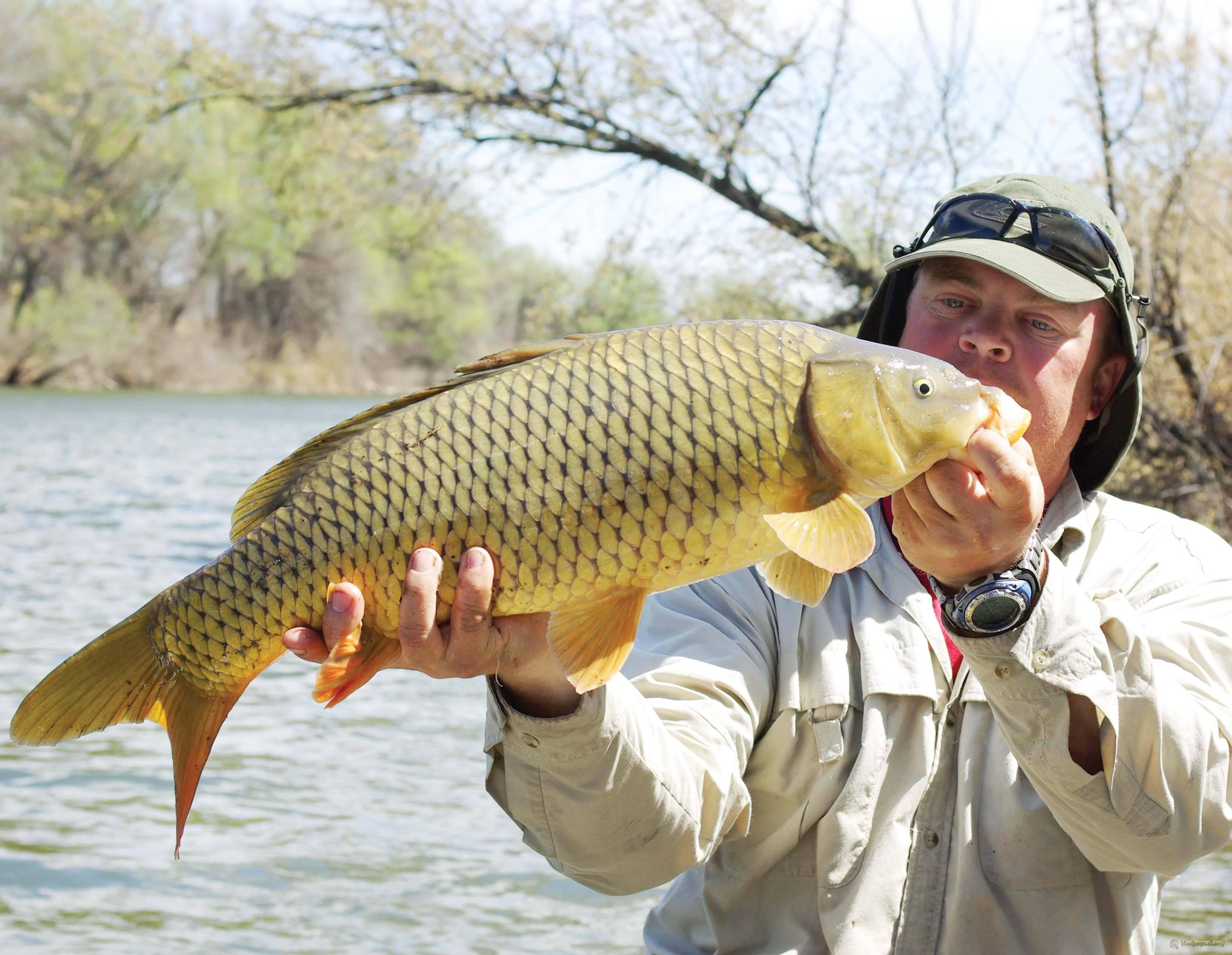 Ловля леща в сентябре: как поймать трофей на фидер, на поплавок и на донку