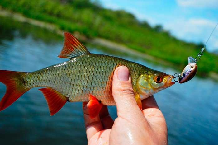 Бомбарда для рыбалки