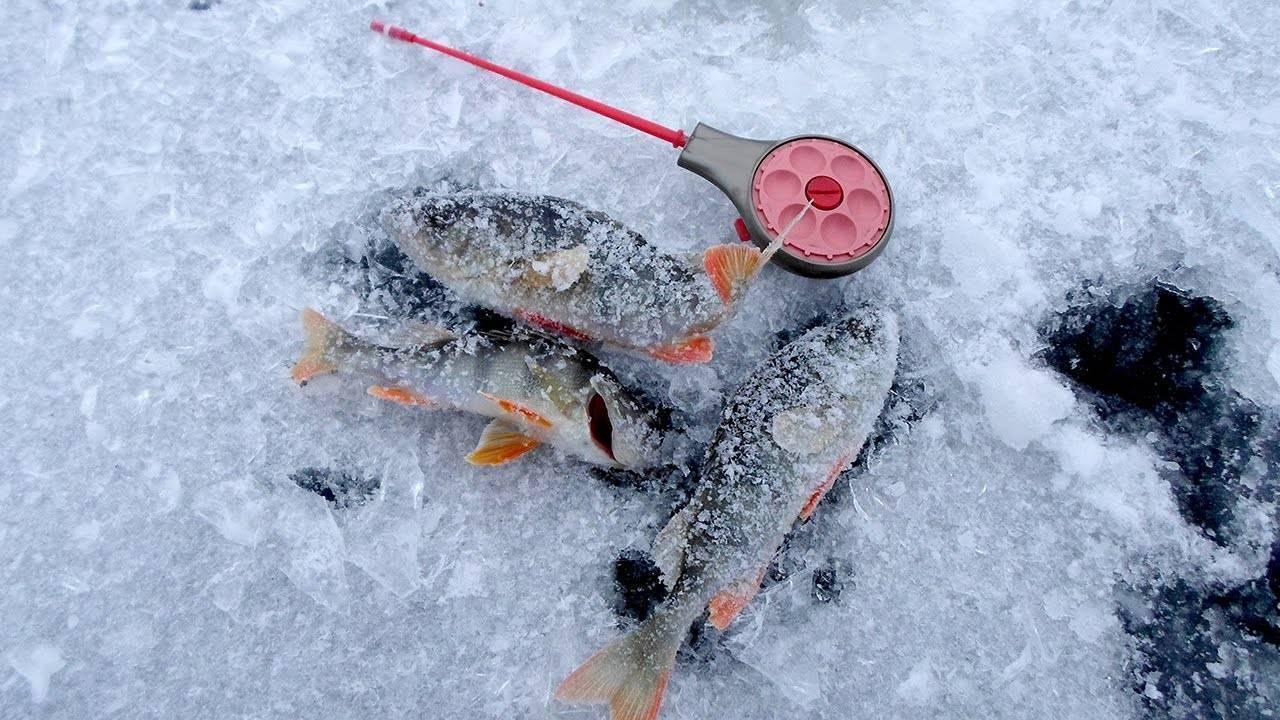 Рыбалка на окуня по первому льду – техника и советы