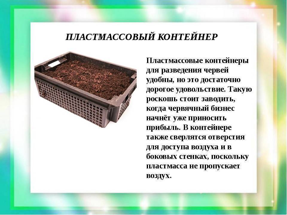 Дождевой червь и его выращивание и разведение в домашних условиях