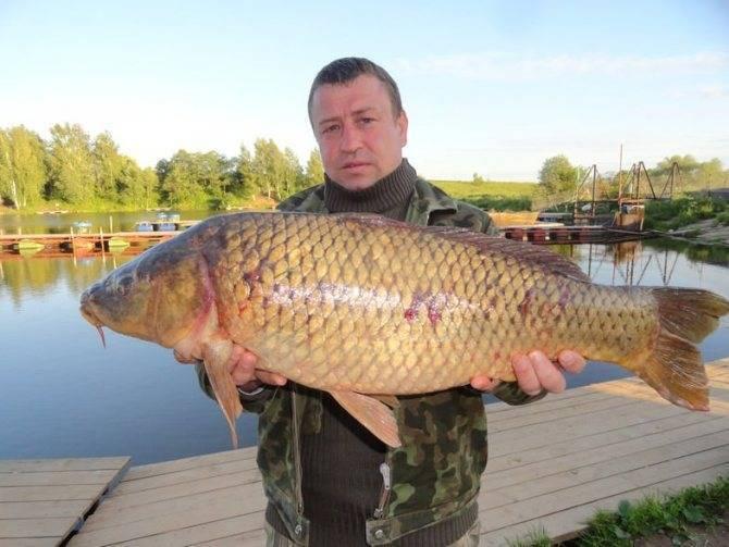 Базы отдыха в псковской области (для отдыха с рыбалкой) - цены