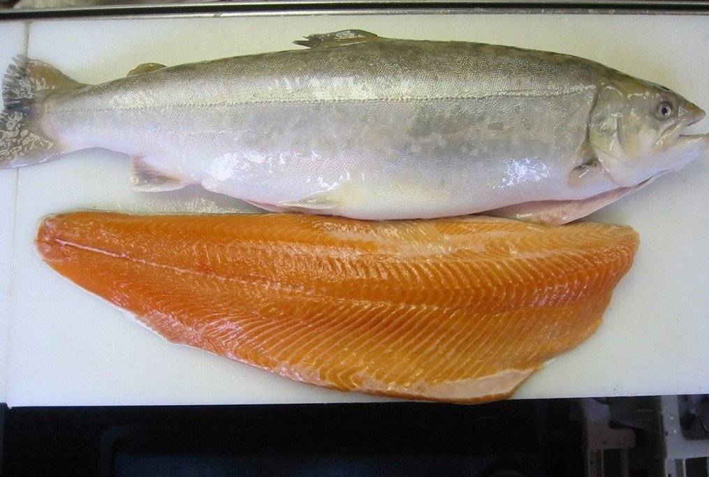 Рыба голец. виды гольцов