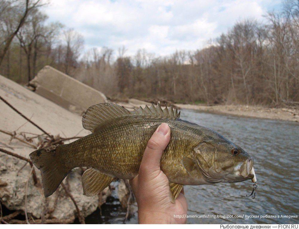 Малоротый басс рыбалка – соединенные штаты - fishingbooker