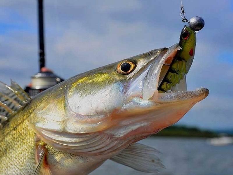 Троллинг рыбалка: методы ловли, снасти и приманки