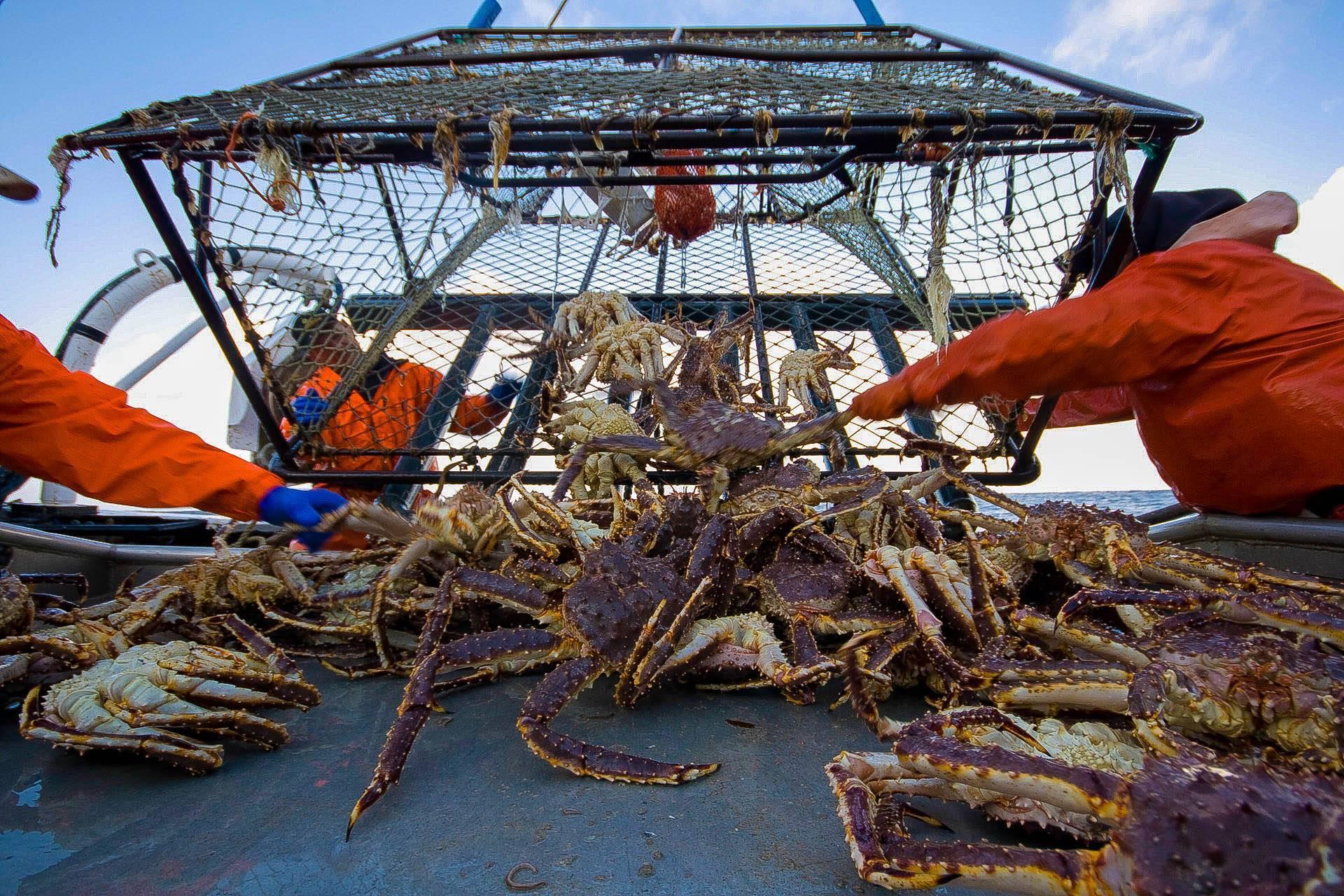 Как ловить крабов в черном море