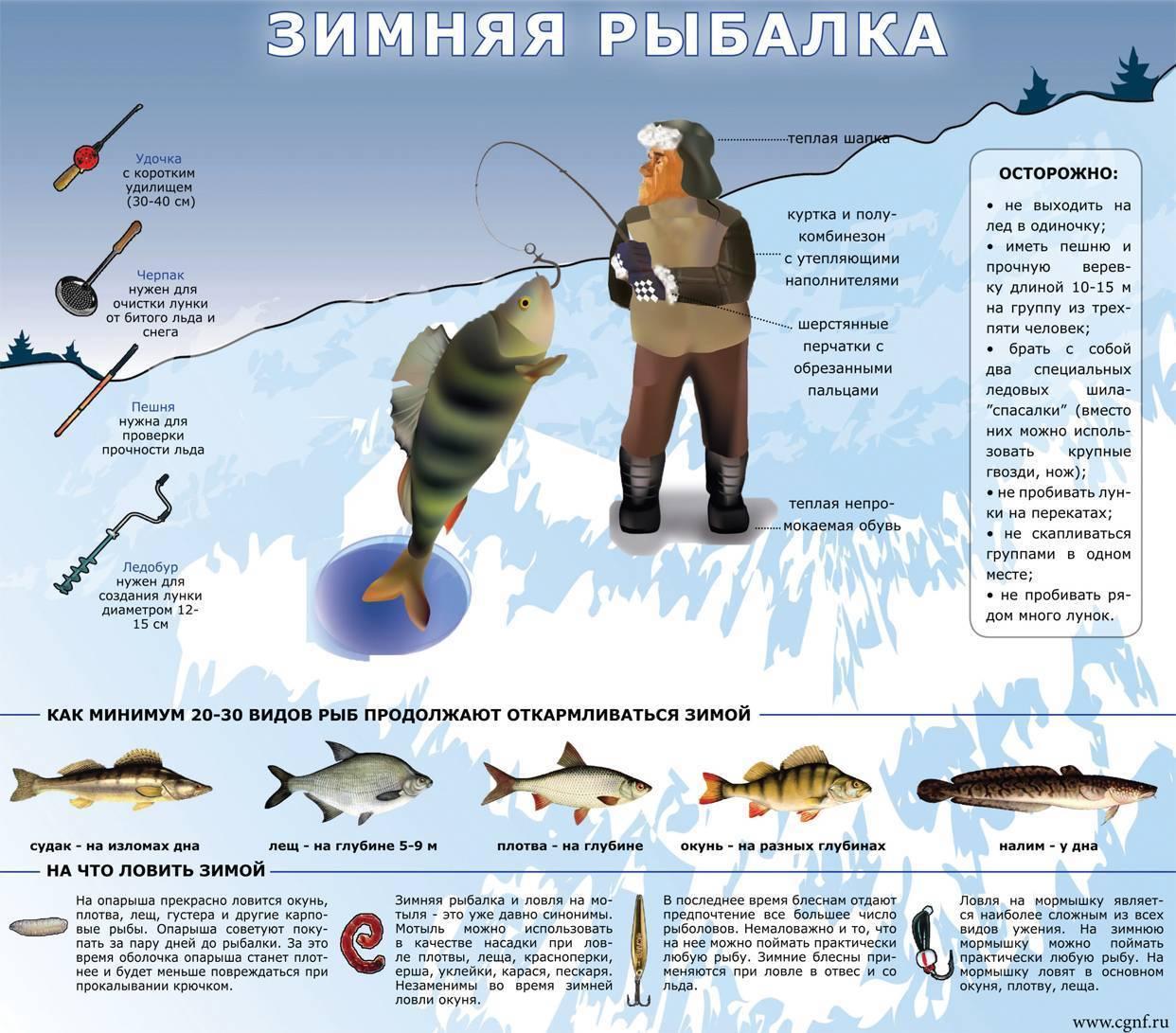 Зимняя ловля на мормышку: 95 фото и видео советы от профессионалов