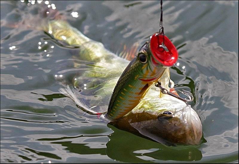 Ловля щуки на поппер: весной, летом,