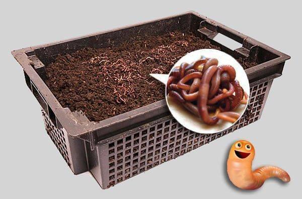 Выращивание червей для рыбалки в домашних условиях | блог анатолия кузнецова