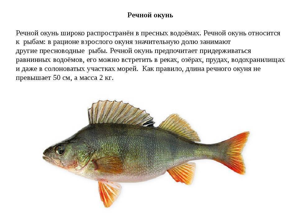 Распространенные болезни аквариумных рыбок: симптомы и лечение