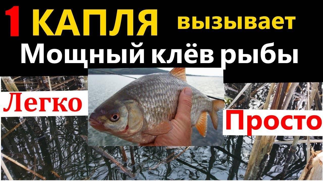 Делаем аттрактанты (активаторы клева) для рыбалки своими руками