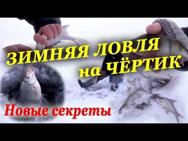 Ловля на черта зимой: видео, техника рыбалки на плотву, окуня или леща