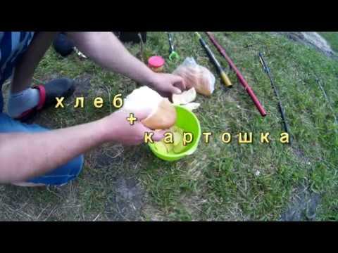 Ловля карпа на картошку - рыбачок!сайт рыбачок