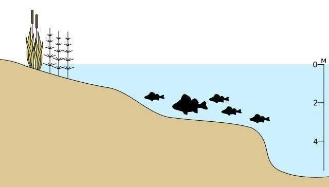 Ловля плотвы летом на поплавочную удочку, на что лучше клюет рыба в июне